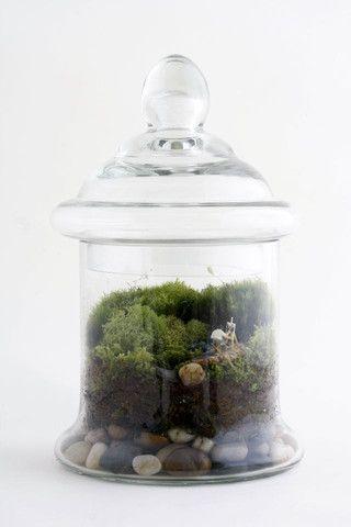 twigterrariums | cool, custom terrariums!