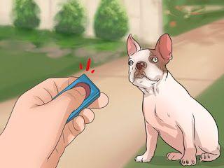 Como escolher um adestrador canino? http://ift.tt/2n9Vvrd