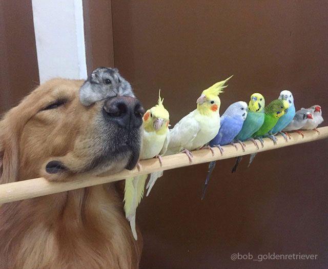 um-cachorro-oito-passarinhos-e-um-hamster-são-os-amigos