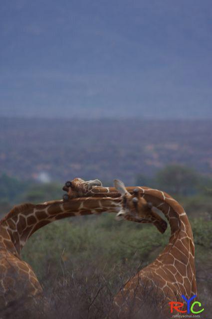 Wildlife photography courses Samburu, Kenya.