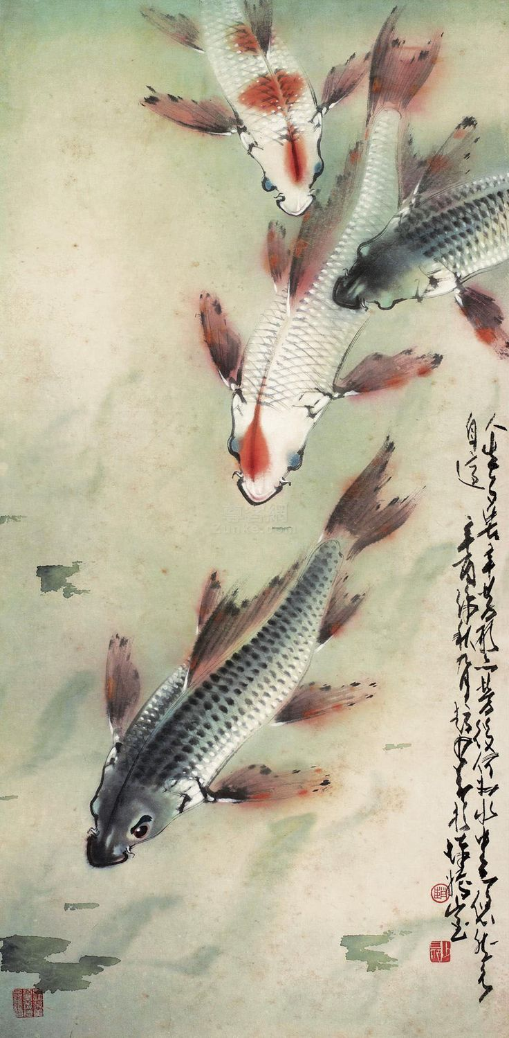1861 best images about cranes koi on pinterest for Chinese koi fish for sale