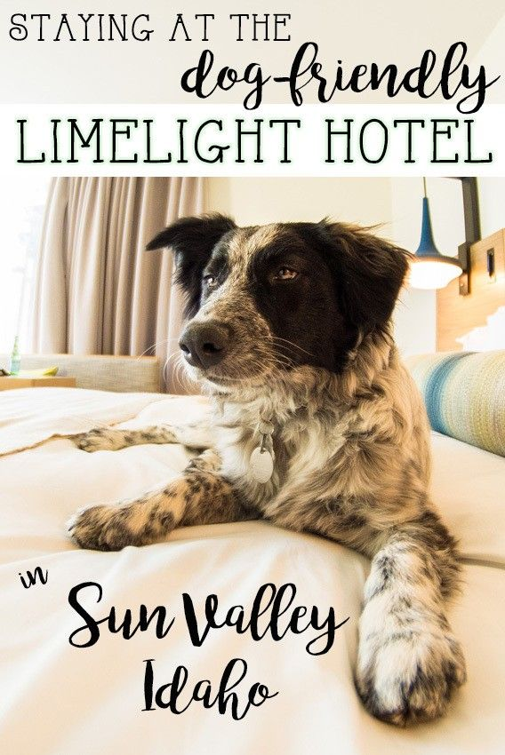 A hotel review & photos of Sun Valley Idaho's newest place to stay, the dog-friendly Limelight Hotel, that is 5 minutes from the slopes.