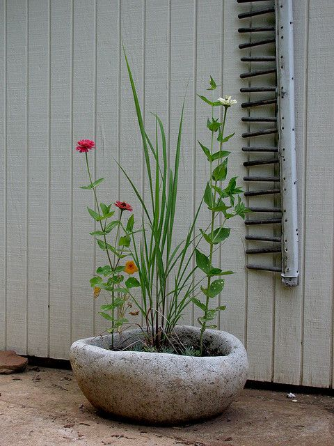Oval Planter With Lemon Grass And Zinnias Hypertufa