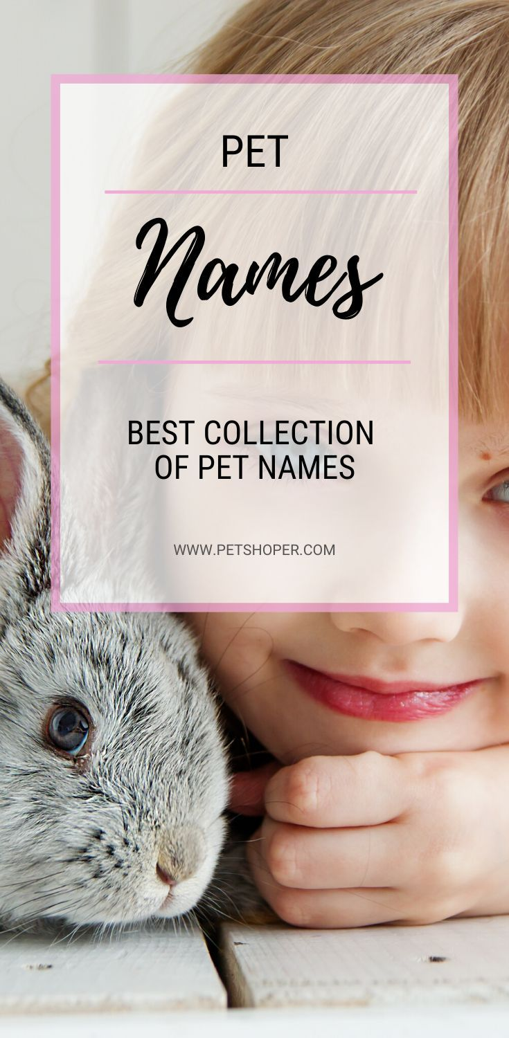Best Collection Of Pet Names Popular Cute Names Ever In 2020 Pet Names Girl Pet Names Pet Names For Girls