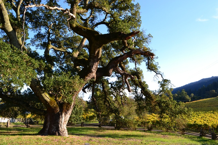 17 best images about wine country outdoor adventures on for Oak glen park