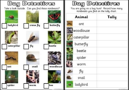 bug identification for kids ks1 and ks2 science teaching resources posters for classroom. Black Bedroom Furniture Sets. Home Design Ideas