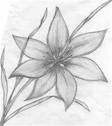 Pencil Drawings Of Flowers Art <b>flower sketches</b> on pinterest  <b>sketches</b> of <b>flowers</b>, rose <b></b>