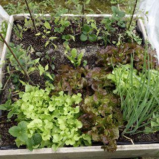 Des plantes qui, comme à l'état sauvage, se rendent de fiers services et se serrent les coudes pour