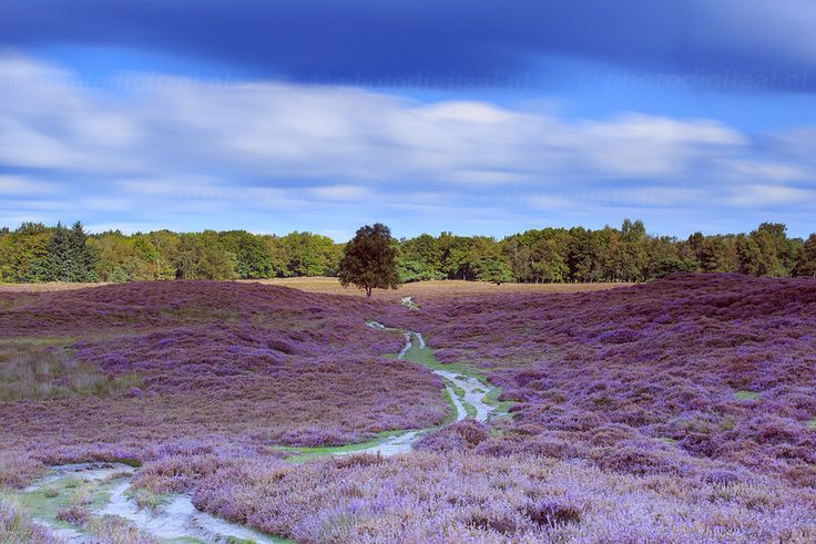 Gasterse Duinen, Drenthe The Netherlands