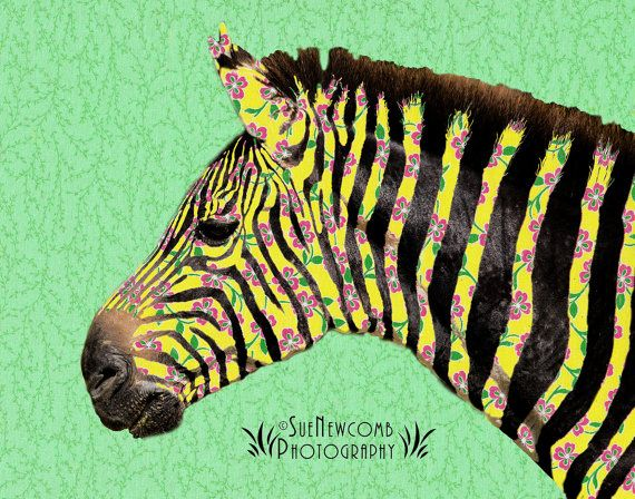 Spring Zebra by SueNewcombPhotos on Etsy. Not that I could improve on the beautiful stripes of a zebra, but I decided to give this one some Spring color. Original photography by me, combined with scanned in material, and designed in Photoshop.