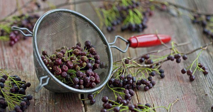 Die aus Nordamerika stammende Aronia hat nicht nur einen hohen Zierwert für den Garten. Sie ist zugleich eine wichtige Heilpflanze und ihre Früchte sind reich an Vitaminen. Welche Inhaltsstoffe die Beeren genau enthalten und wie man sie verarbeitet, erfahren Sie hier.