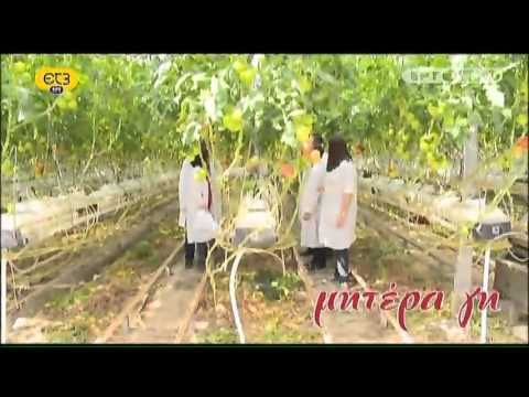 """Greek TV show """"Mother earth"""" visit to Agritex greenhouse. Talking about hydroponics & integrated pest management"""