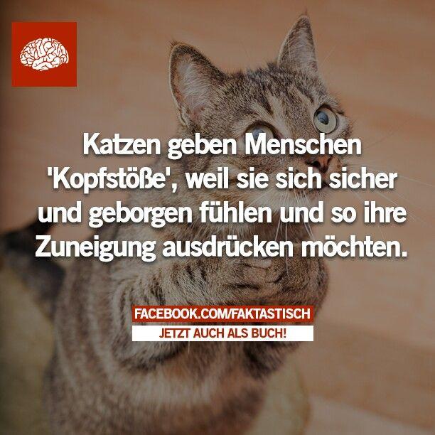 Faktastisch.net