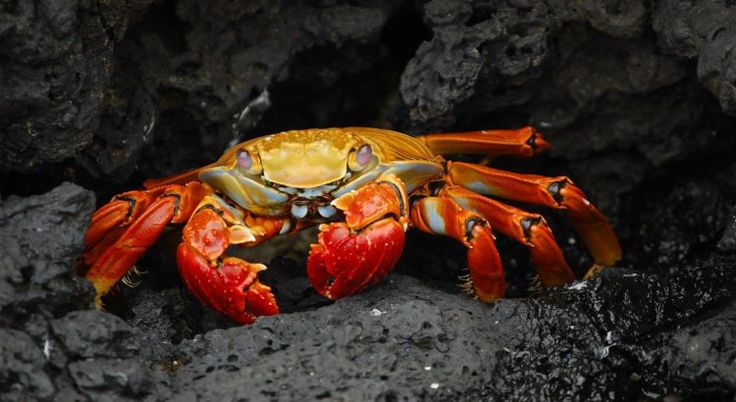 Crab Mentality and Writers