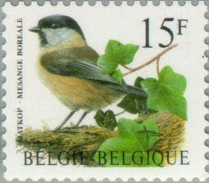 Willow Tit (Parus montanus)