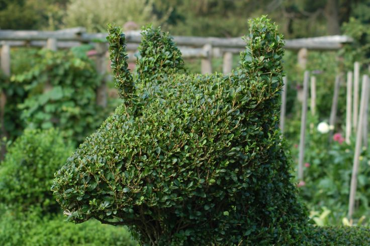 "I photographed this topiary (http://landscaping.about.com/cs/lazylandscaping/g/topiary.htm) at the Green Animals Topiary Garden in Newport, RI. The ""green animal"" in this case is a baby unicorn, sculpted out of boxwood. Topiary is just one of the uses to which boxwood shrubs can be put: http://landscaping.about.com/od/evergreenshrubsbushes1/p/english_boxwood.htm"