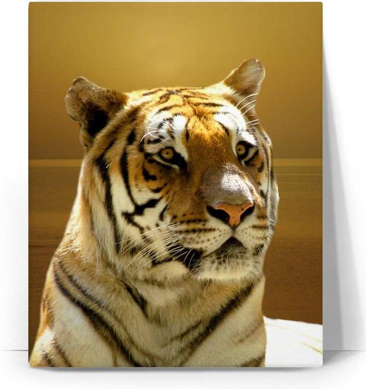 Check out my new product https://www.rageon.com/products/golden-tiger-canvas-art-print?aff=BWeX on RageOn!