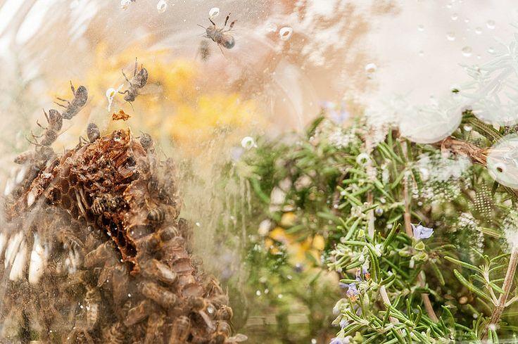 Wunderbugs_08