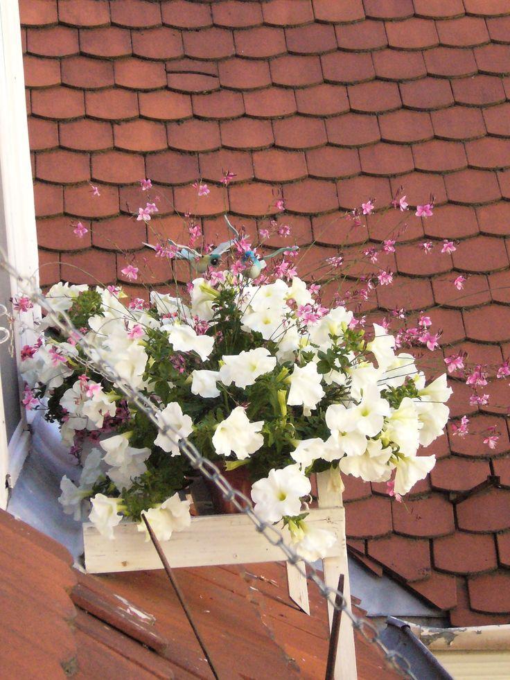 Summer flowers in window...:)
