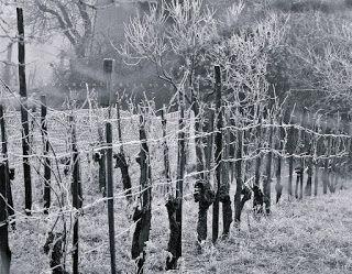 Pölcz Klaudia - kisklau: Zúzmarás, hideg újév