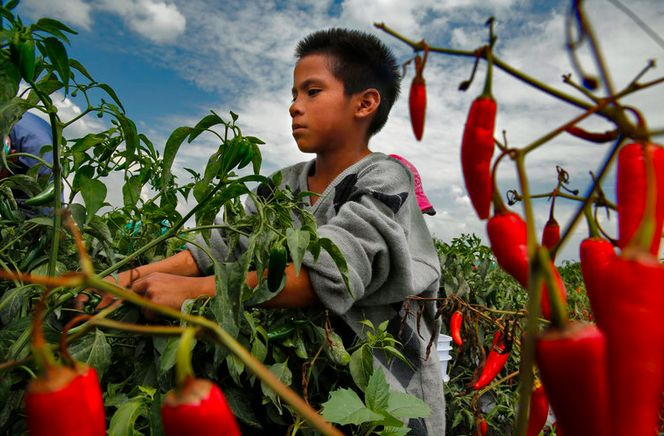 NeoMexicanismos - kateoplis: The Hard Work and Harsh Conditions of Mexican Farm Labor Camps