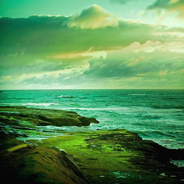 Muriwai,Auckland,NZColors Photography, Beautiful, Sea, Colors Schemes, Flower Fields, Ocean Scene, Shades Of Green, Landscapes Photography, New Zealand