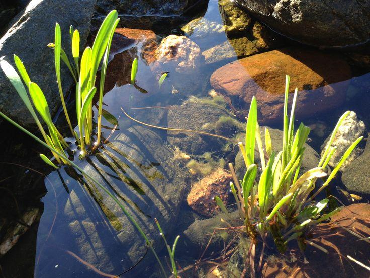 Clear water, Pyhämaa, Finland