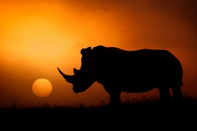 """""""Rhino"""" with Sunset in Johannesburg, South Africa."""