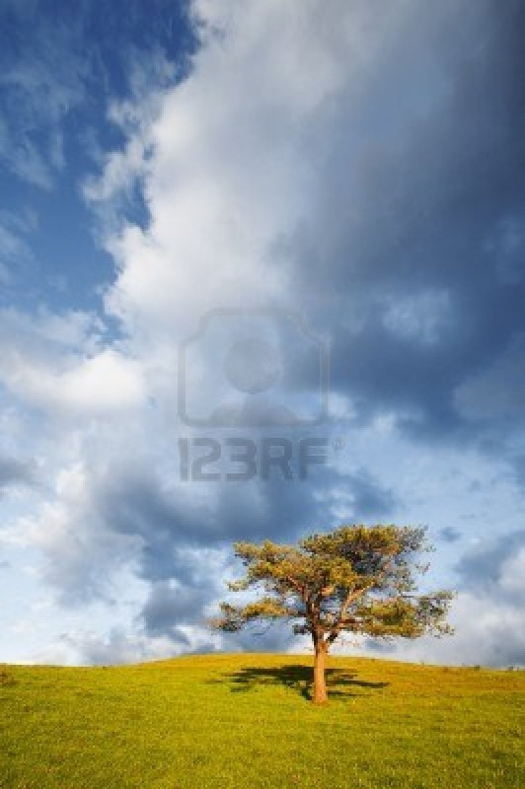 árbol solitario en el cielo nublado y el campo  Pais Vasco