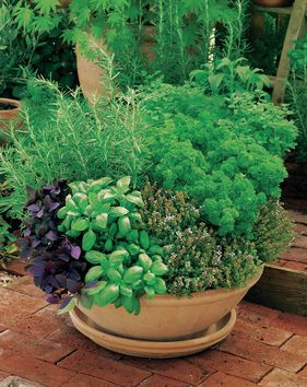 No digging required: grow fresh herbs in a container, and keep them handy in your kitchen or by the grill. Click through for planting tips.