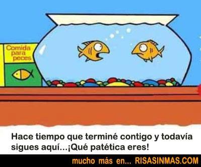Pareja de peces discutiendo | Risa Sin Más