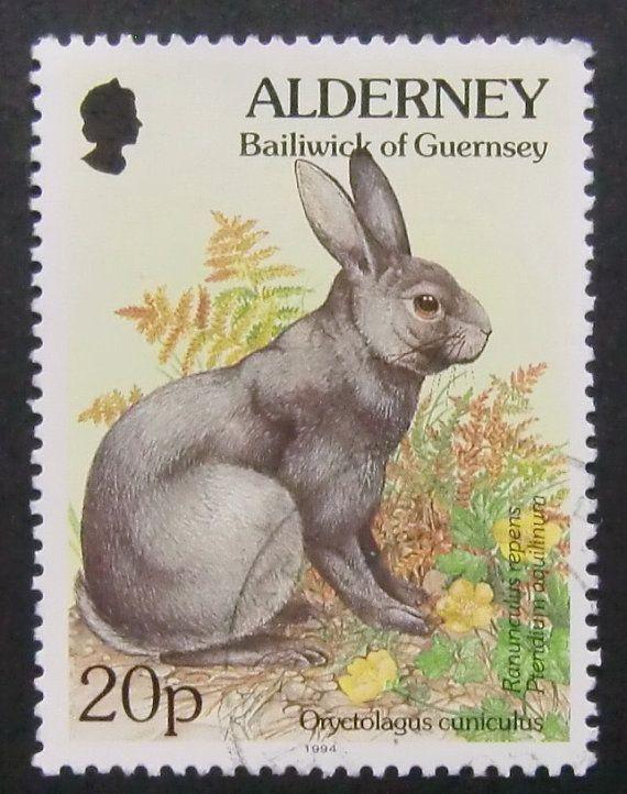 Alderney Bailiwick of Guernsey: Oryctolgus cuniculus, European Rabbit - (Coelho europeu)