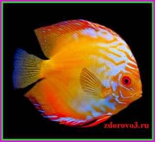 Рыба, полезные свойства и вред.
