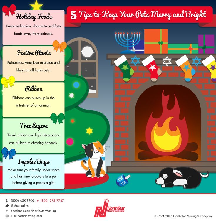 5 tips to keep your pets safe and merry all #holiday season. #pet #safety