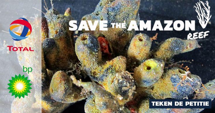Ondanks het risico op een olieramp willen BP en Total boren bij het kwetsbare koraalrif. Stop ze nu het nog kan. Teken de petitie.