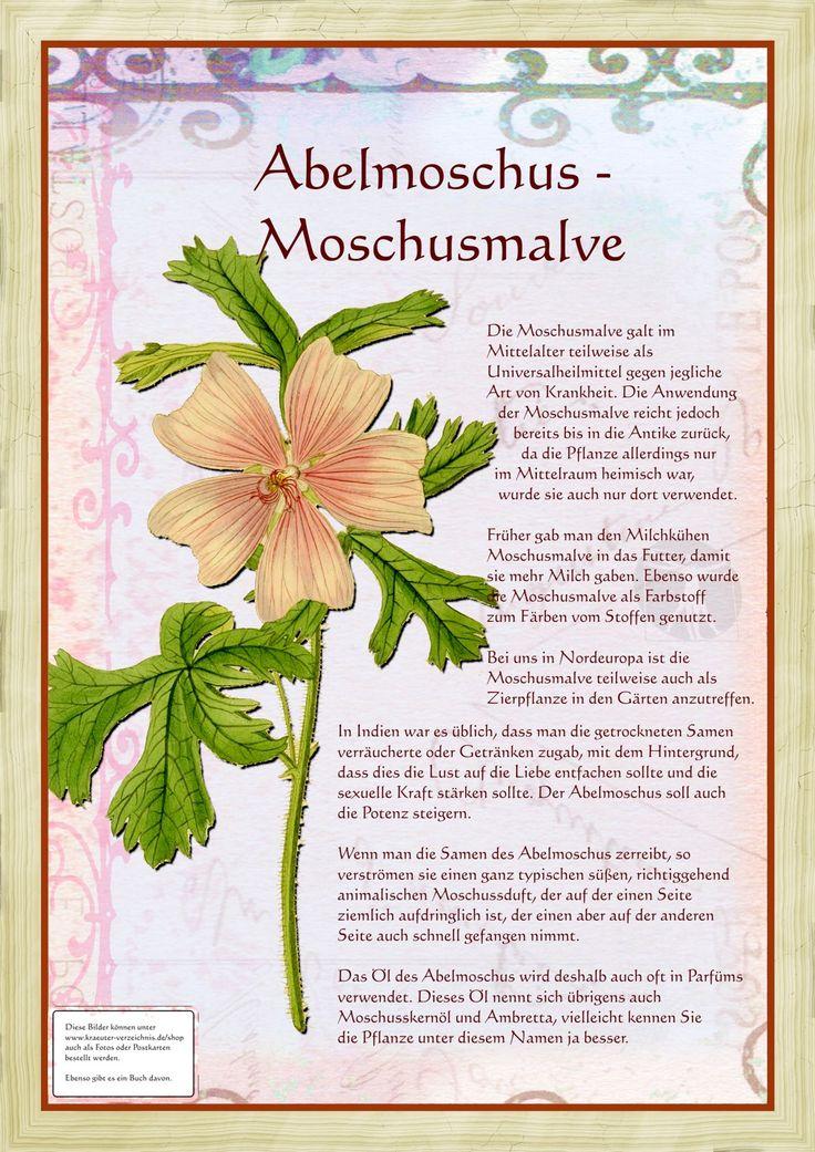 Abelmoschus Moschusmalve