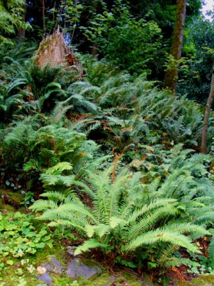 399 best images about grasses and ferns on pinterest for Woodland shade garden designs