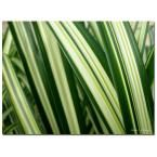 47 in. x 35 in. Colors of Green Canvas Art