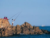 Lagoon Fishing:  Fishing expeditions can be organised on the Knysna Lagoon, one of the biggest salt-water estuaries in Southern Africa. Experienced skipper with full commercial license and includes bait collection, lure fishing, trolling etc. All equipment supplied.