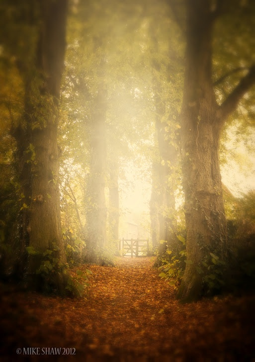 A stunning landscape photo, it just invites you venture down the path and go through the gate.