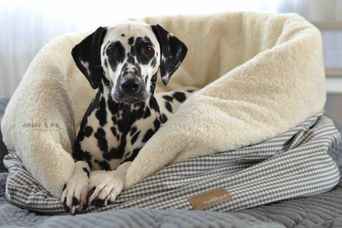 [Hundeurlaub] Einmal Zuhause zum Mitnehmen bitte!