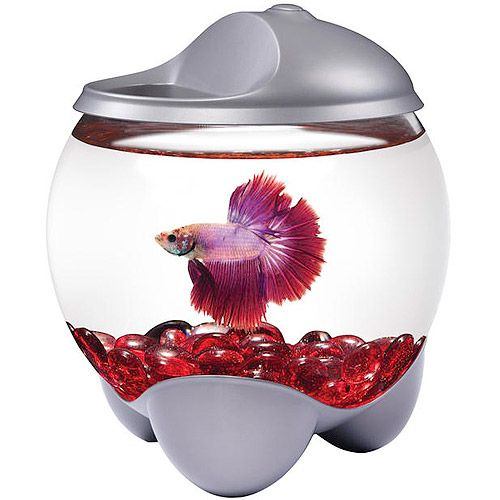 Aqua cultur 0 7 gallon betta bubble with led hood for How much are betta fish at walmart