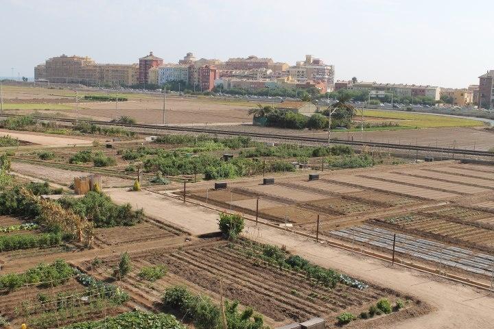 Parcelas de alquiler en huertos urbanos y ecológicos en la Huerta Norte - Alboraia - Valencia.