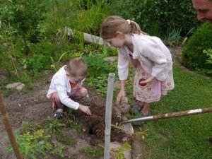 Kartoffelernte mit Kindern: Gartenevent für kleine Gärtner