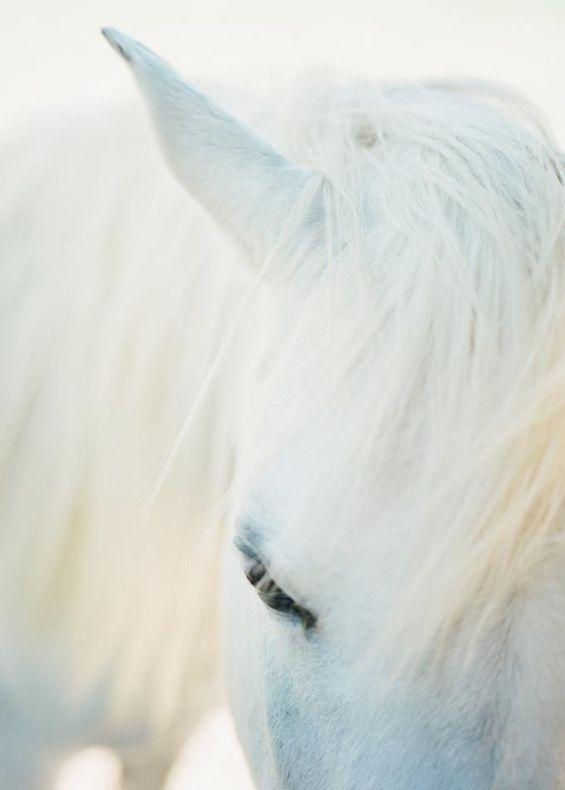 Le vent est un cheval : écoute comme il court ... - Pablo Neruda -