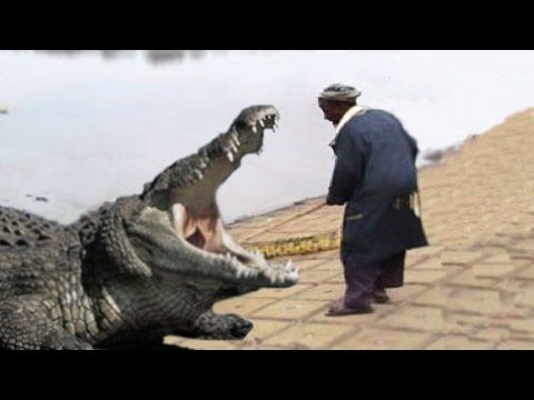 Fisherman When Alligator Bady Start Crying - YouTube