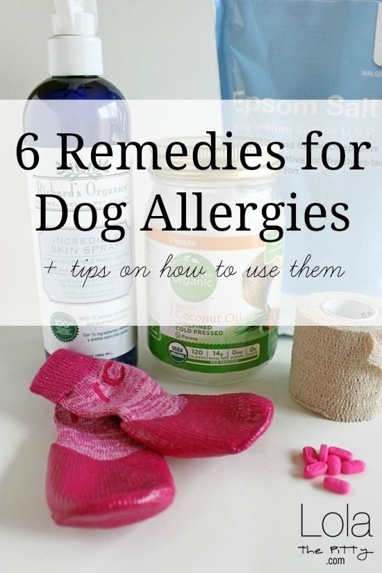 6 Remedies for Dog Allergies (and how we use them!) @LolaThePitty