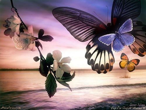 Красивый пейзаж.Море.Бабочки