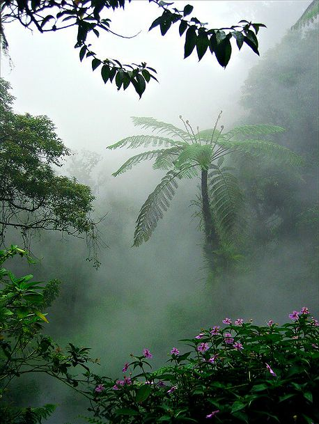 Javanese Virgin Forest near Gunung Gede, Indonesia.