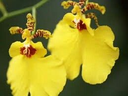 Kandy dance flower in kandy srilanka.contact us.susantha2803@gmail.com
